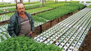 Na área urbana de Flores da Cunha, o produtor Plínio Gotardo Dartora trabalha com hortaliças hidropônicas e utiliza a água da chuva para alimentar as plantas Foto: Camila Baggio