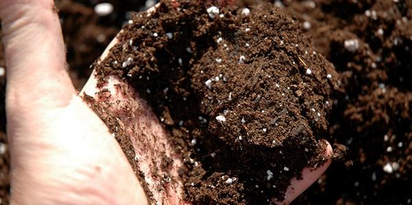 Substrato deve conferir características químicas, físicas e biológicas adequadas às plantas, servindo como suporte físico para as raízes e fornecendo o mínimo possível de nutrientes