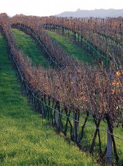 vinicola-boscato39