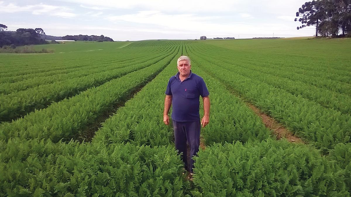 O produtor Roque José Garibaldi é o terceiro maior produtor de cenouras do Paraná. São 150 mil quilos por mês