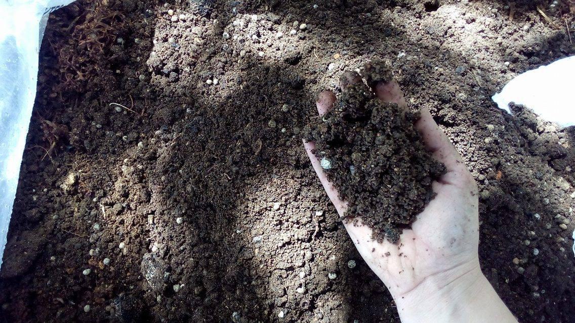 Maior aeração e capacidade de retenção de água no solo, melhorando sua estrutura e apresentando capacidade de manutenção da temperatura, evitando grandes variações durante o dia, é uma das vantagens apresentada pela adubação orgânica vinda dos resíduos da uva.