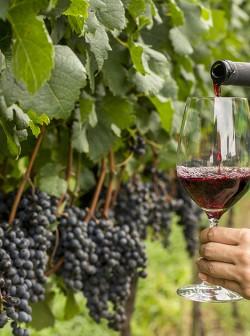 Uva e vinho - Crédito Dandy Marchetti, Ibravin