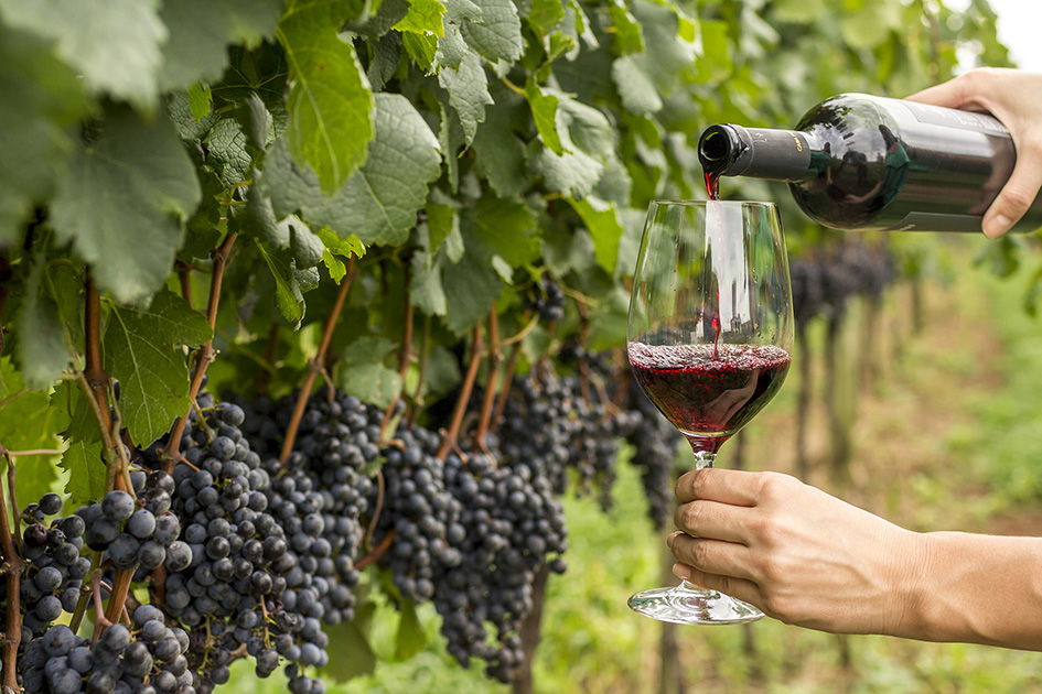 Uva e vinho - Crédito