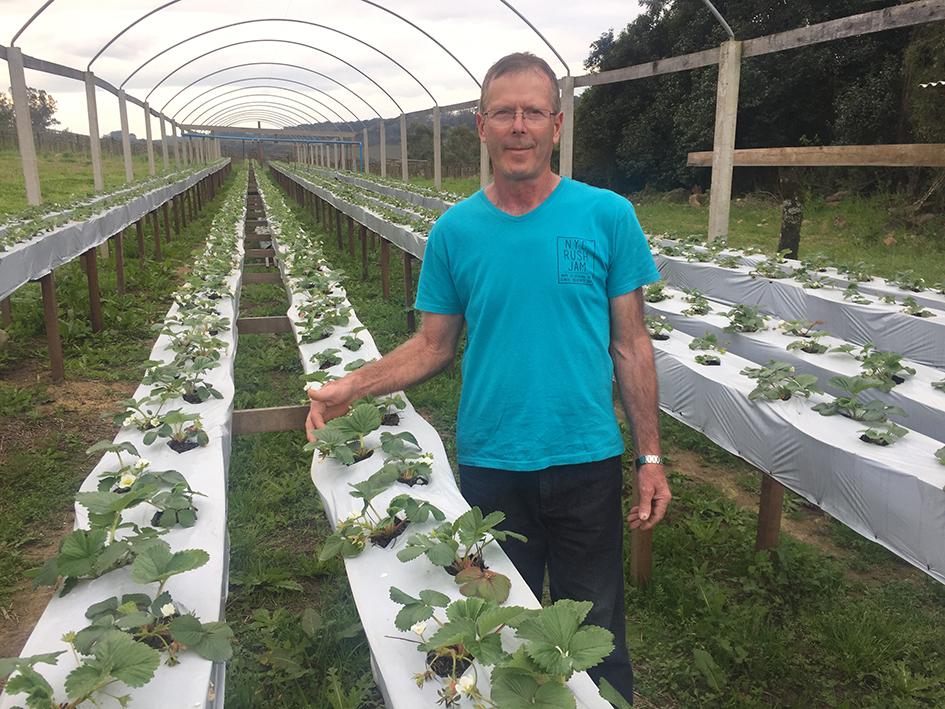 Luiz Carlos Stuani está iniciando na produção de morangos orgânicos. Nos próximos dias, a ideia do produtor é cobrir a plantação que hoje conta com três mil mudas.