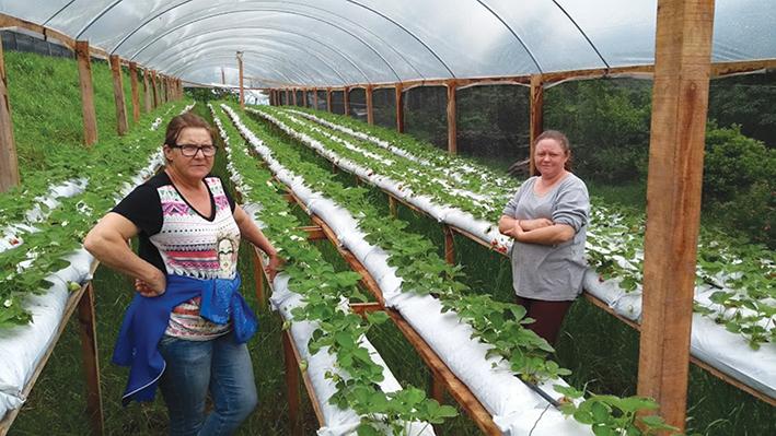 Solice Beatriz Moroni e a cunhada, Clarice Luíza Bonetti Moroni, tocam a propriedade e a produção de orgânicos.
