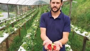 Ao optar pela cultura orgânica de morangos, Junior Gaiardo aliou qualidade e rentabilidade aos seus produtos.
