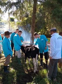 curso bovinos